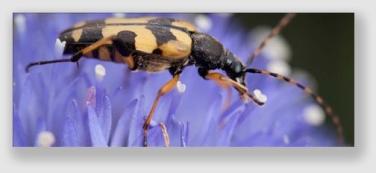 beetle160803