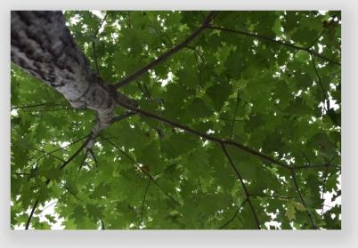 canopy160810