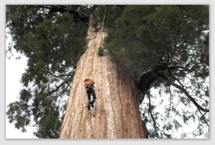 treeclone160830
