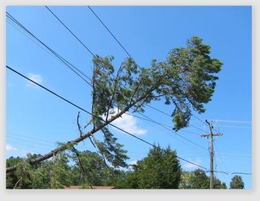 treelines160824