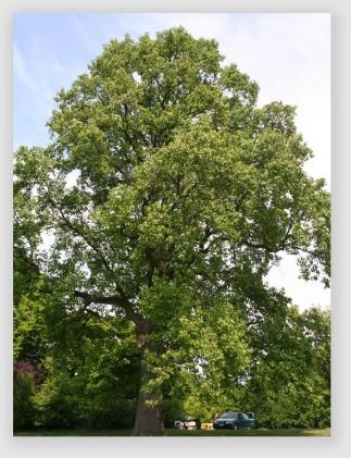 bigtree160929