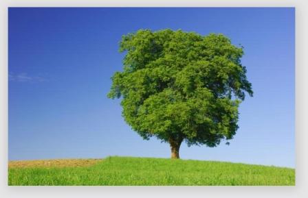 treefeelings160912