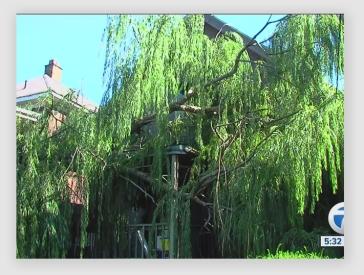 treeonhouse160913