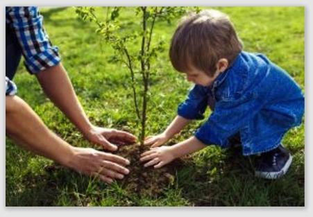 planttree161031