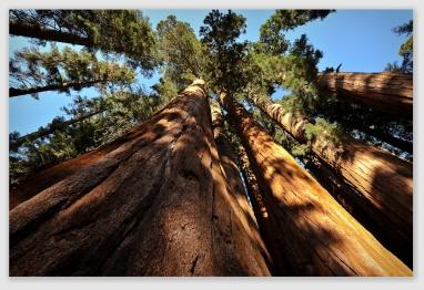 sequoia161028