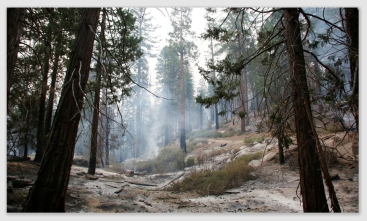 sequoiafire161027