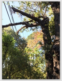 treeboard161101