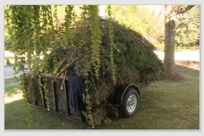 treescam161003