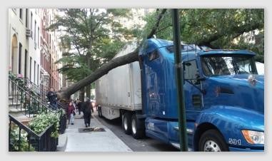 trucktree161014