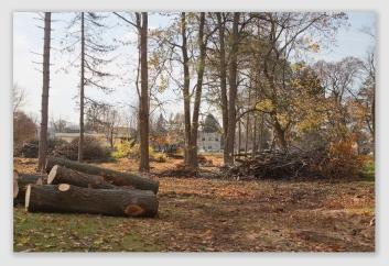 cutwood161121