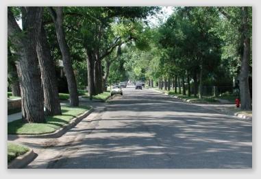 treestreet161102