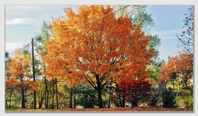falltree161221