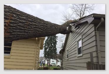 treeonhouse161201