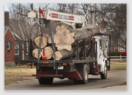 treetruck161216