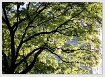 canopy170113