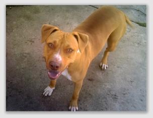 dogdies170104