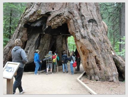 sequoia170109