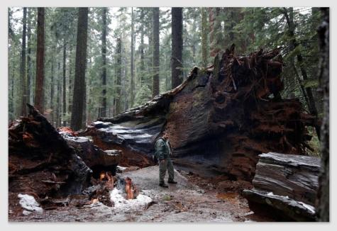 sequoia170111