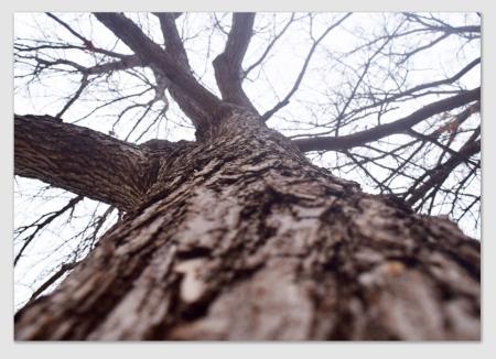 tree170118