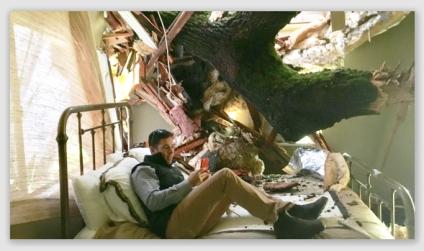treeinwinery170110
