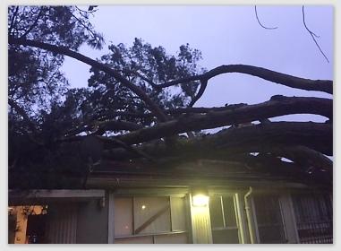 treeonhouse170109