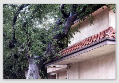 treeonhouse170110