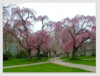 cherrytree170215