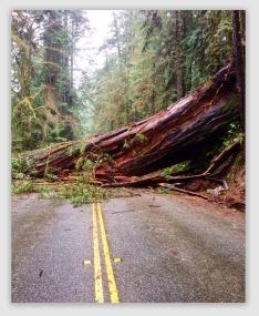 redwood170206