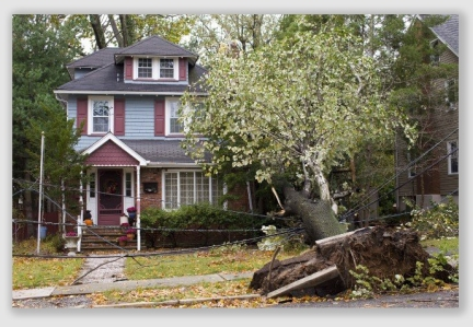 news links 2017 tree and neighbor law for homeowners and