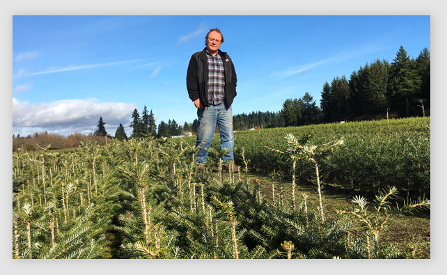 U Cut Christmas Trees Seattle
