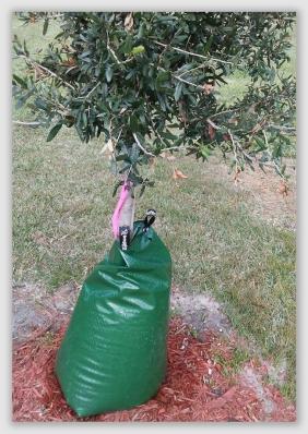 5f97c1703f2 Brunswick, Georgia, The Brunswick News, December 4, 2017: Newly-planted  trees will need a determined buddy