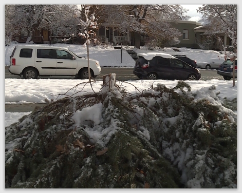 News Links – 2018 | Tree and Neighbor Law For Homeowners and