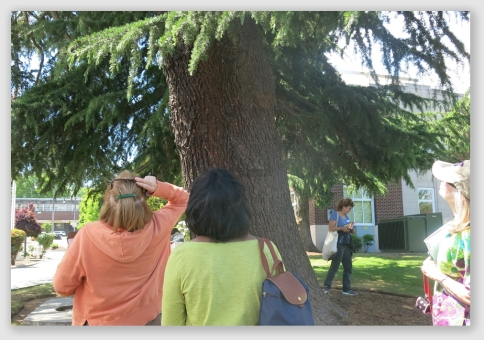 News Links – 2019 | Tree and Neighbor Law For Homeowners and