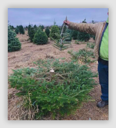 """Tree Guards 39/"""" Professional Shrub//Sapling Protector With Canes /& Ties"""